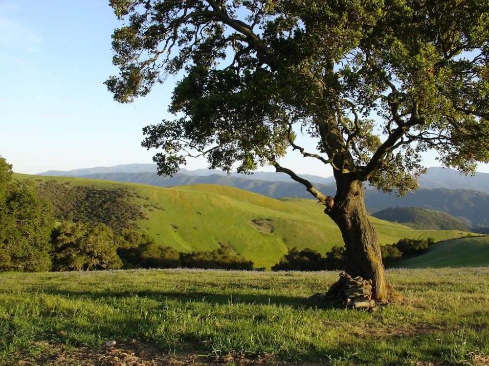 Carmel Valley Auctions