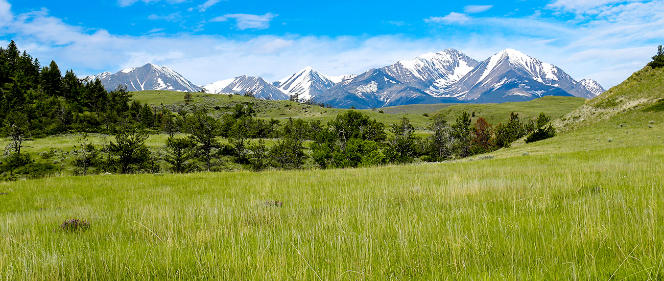 Montana Land Auctions