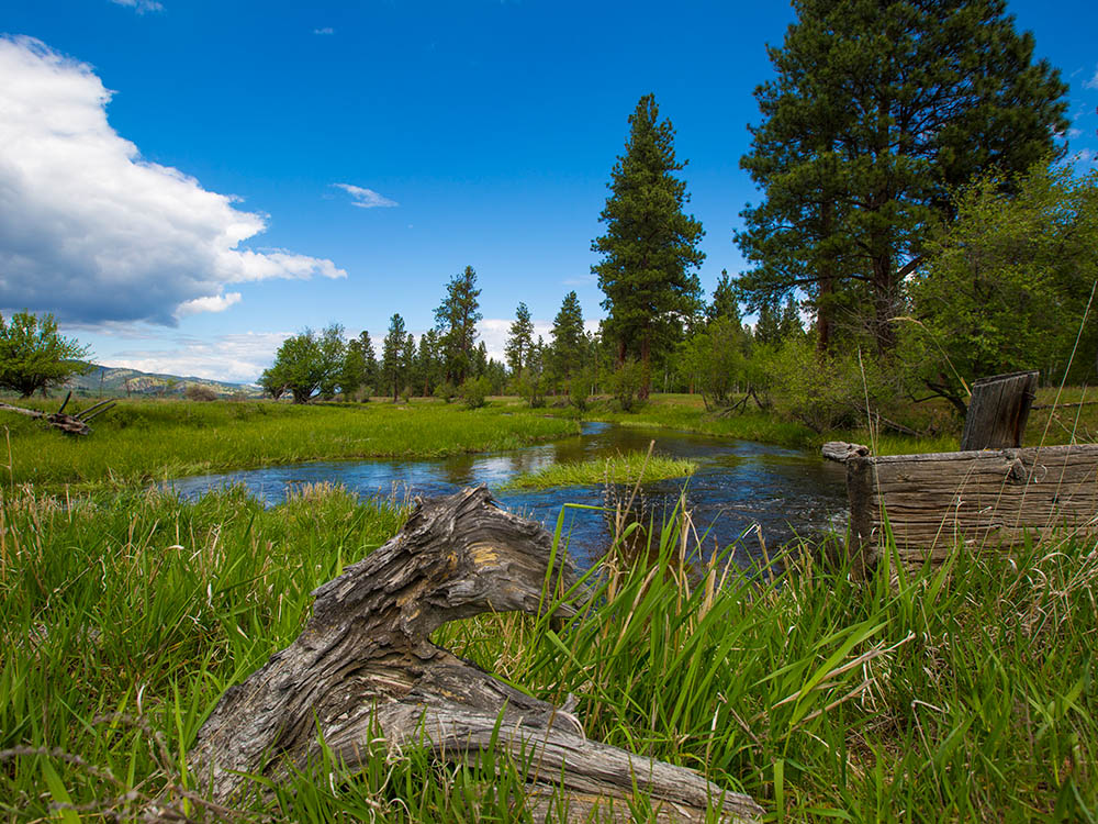 montana water auction