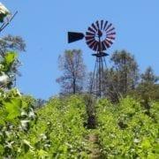 Mellowood Vineyard