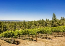 Fairplay Vineyard Auction