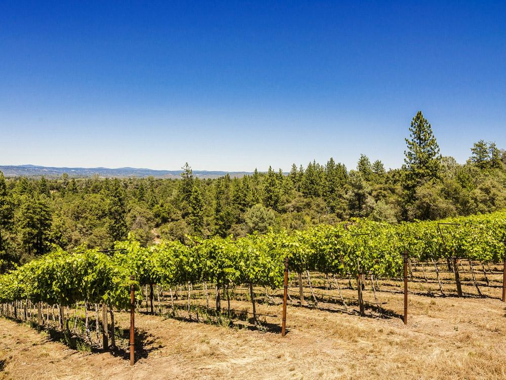 Fairplay Vineyard Auction