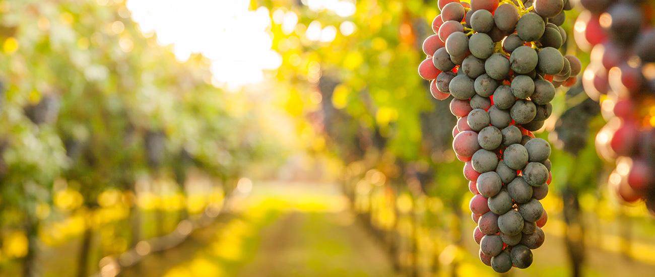 Mellowood Vineyard Auction