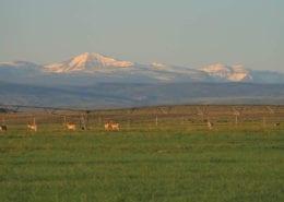 Wyoming Farm Land