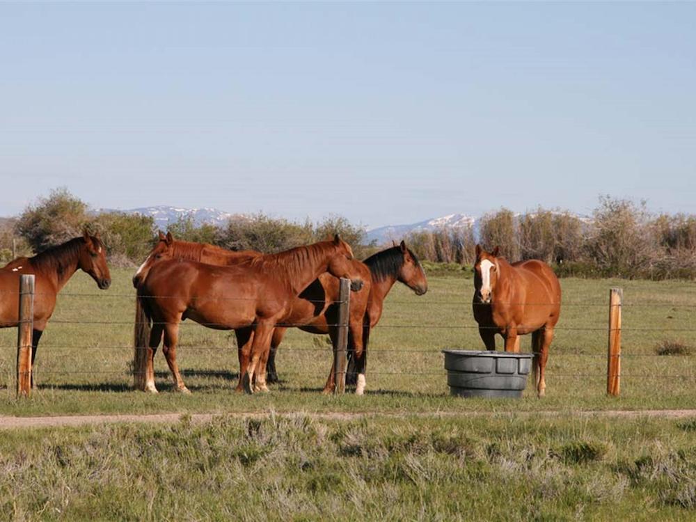 Rimfire Ranch Horses