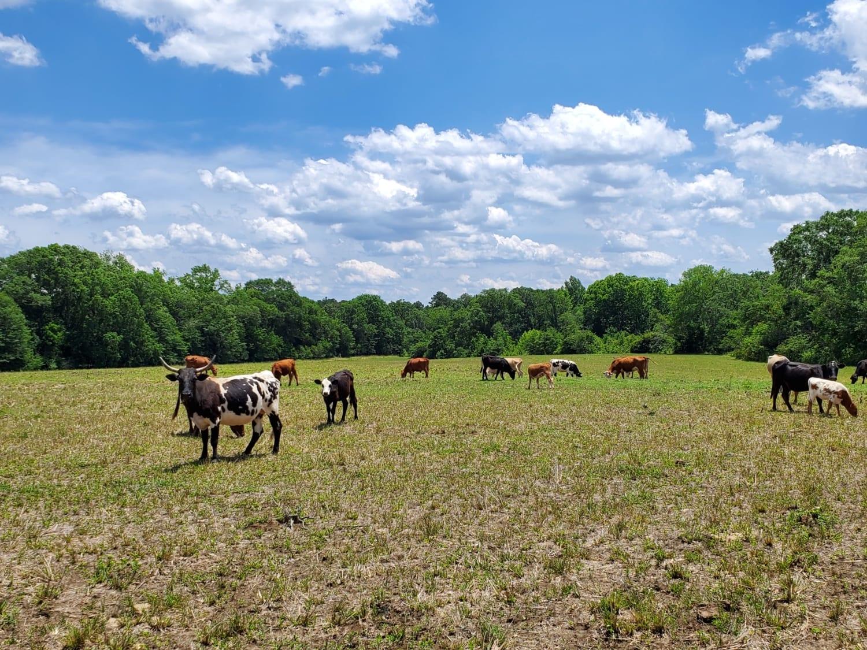 Georgia Land Auction