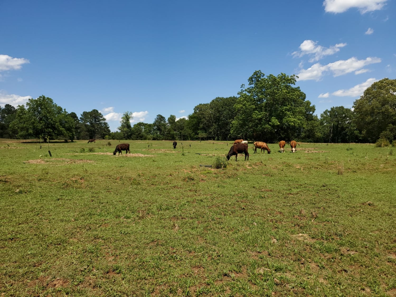 Georgia Farm Land Auction