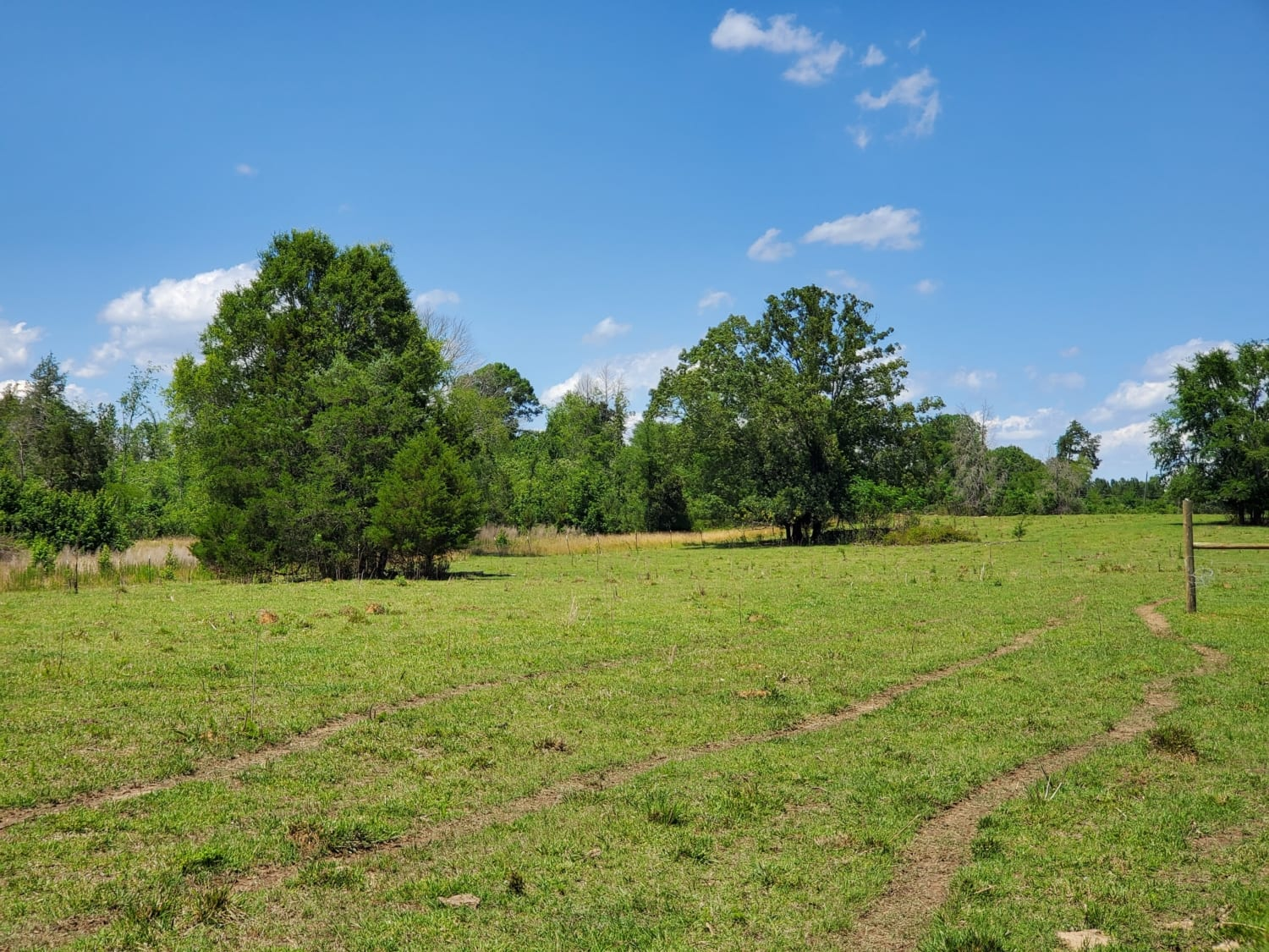 East GA Cattle Ranch