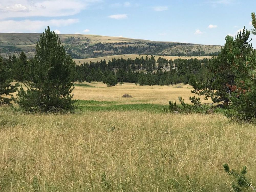 Montana Land Auction